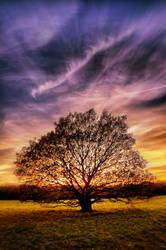 Tree by hayleyonfire