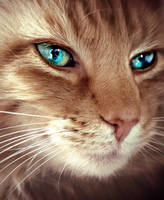 Eye Of The Tiger (cat)