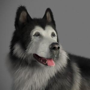 hoangphamvfx's Profile Picture