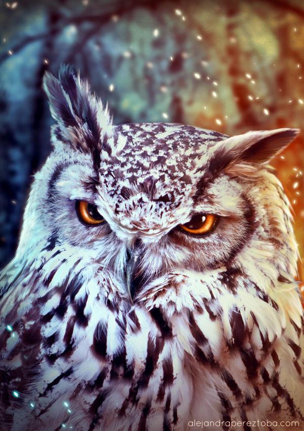 The wise Owl by Alejandra-perez