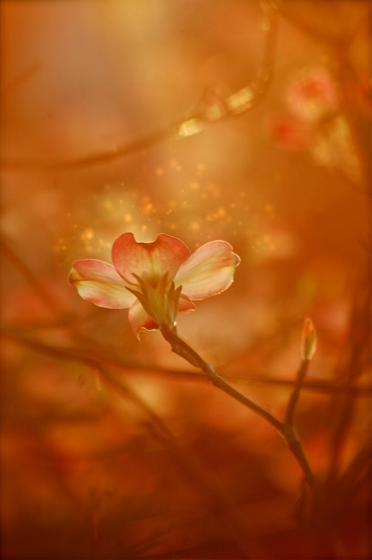 Beauty And The Beast Flower By Eclipxphotography On Deviantart