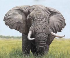 Bull Elephant. Oil on panel.