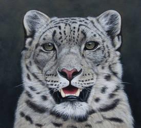 Snow Leopard Portait. Oil on panel by painterman33