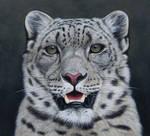 Snow Leopard Portait. Oil on panel