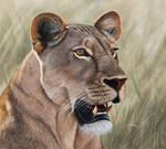 Lioness. Oil on panel