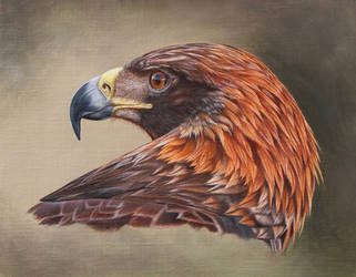 Golden Eagle. Oil on canvas. by painterman33