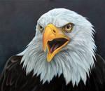 Bald Eagle. Oil on Panel.