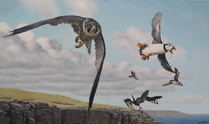 Peregrine and puffins. Oil on canvas.