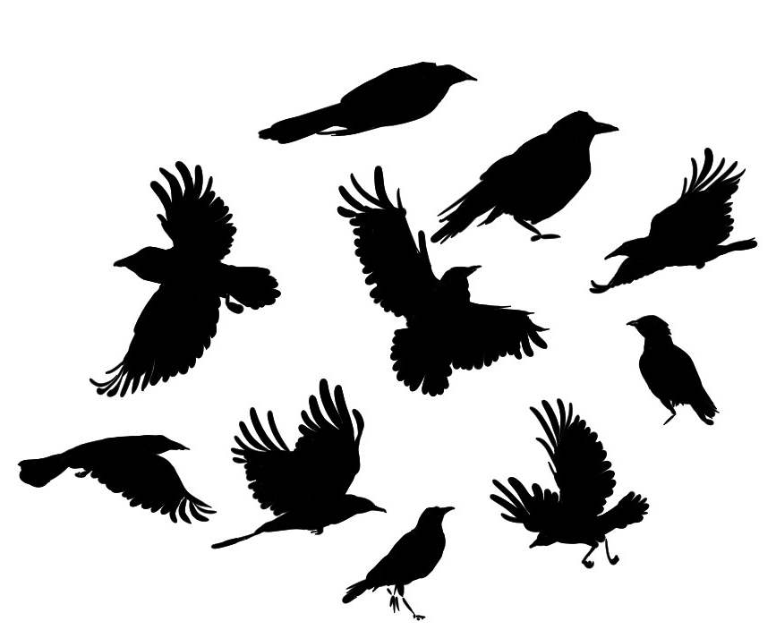 Crow practice by MudLobster on DeviantArt