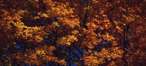autumn leaves by Zuzi-C12
