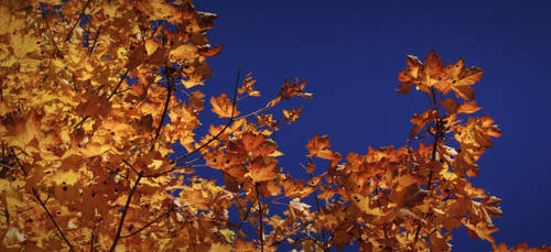 autumn leaves 2 by Zuzi-C12