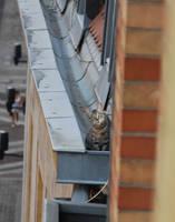 Tichat sur un toit by lythis57