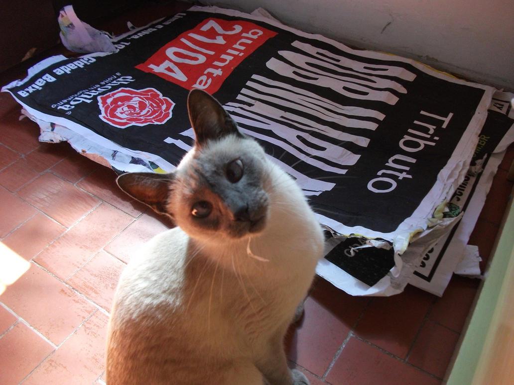 Is Instinct Cat Food Low In Phosphorus
