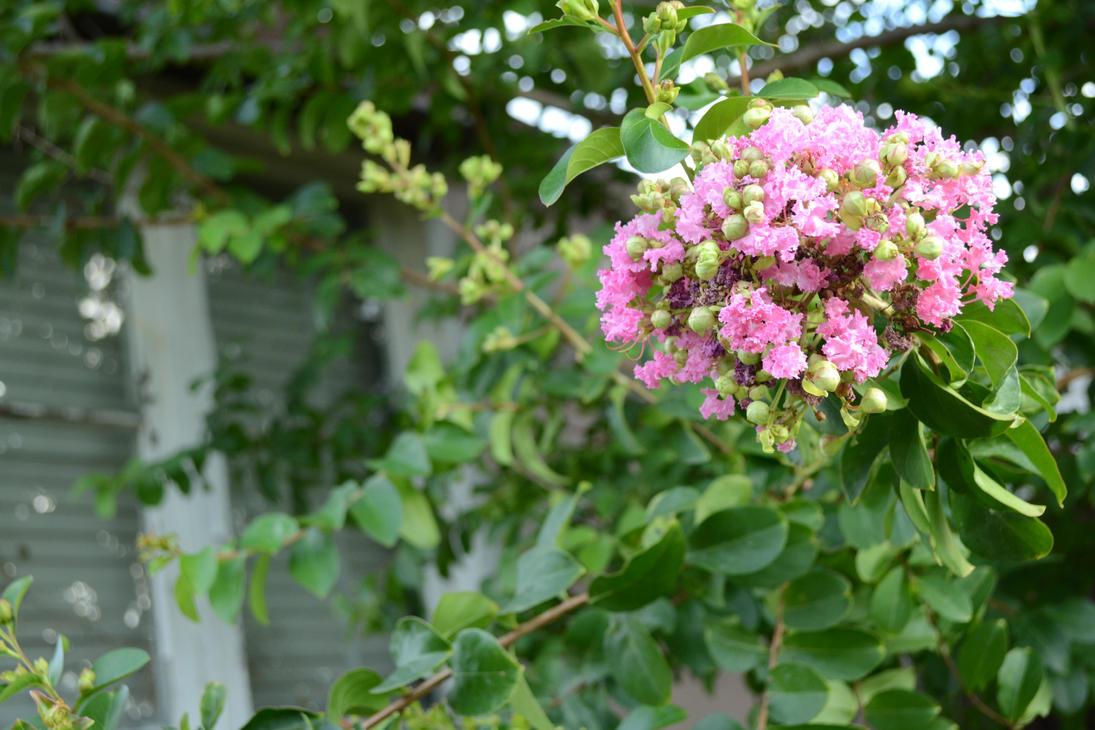 Backyard Exploration - Flower by Amarganth