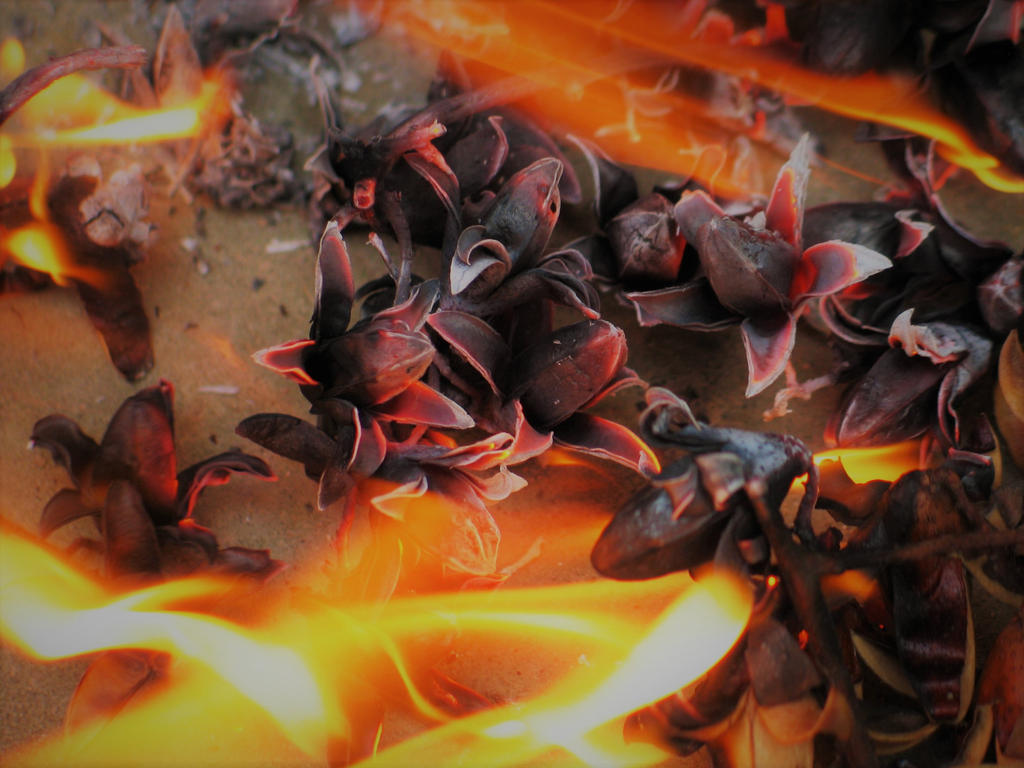 beauty of burning 11 remake by nnmushroom