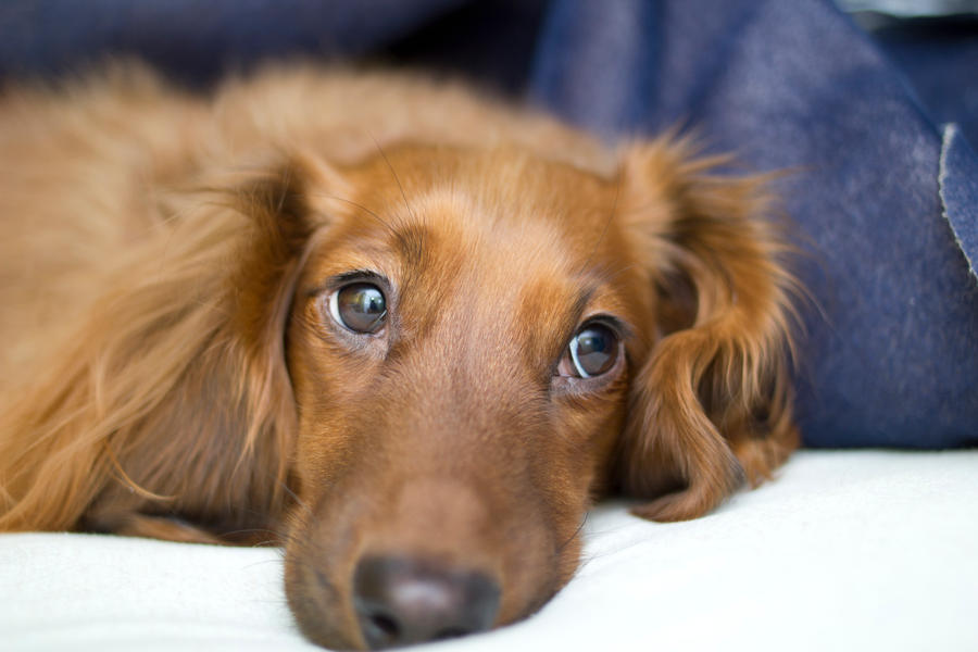 puppy dog eyes (4) by pringle753