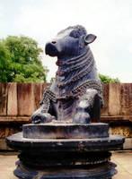 Nandi by ash2000