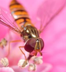 Swift fly eyes by BDStudio