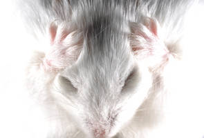 Hamster rage by BDStudio