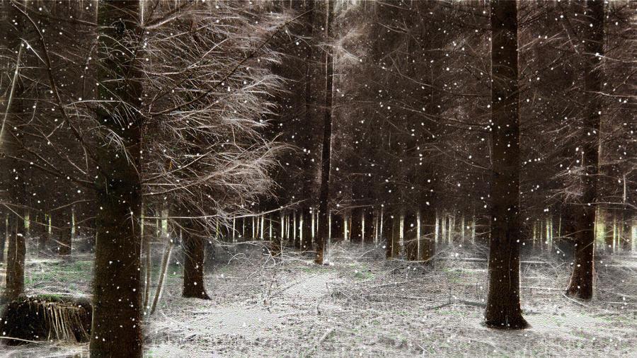 Snowforest by BDStudio
