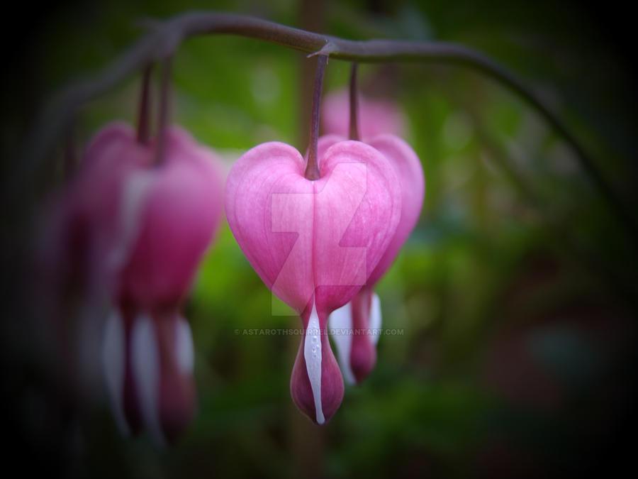 Bleeding Hearts by AstarothSquirrel
