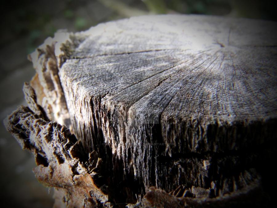 Stump by AstarothSquirrel