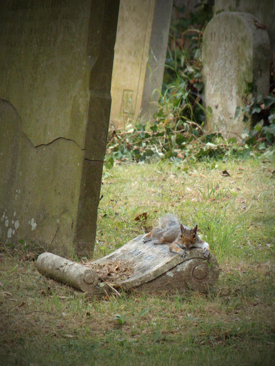 Stealth or Lazy by AstarothSquirrel