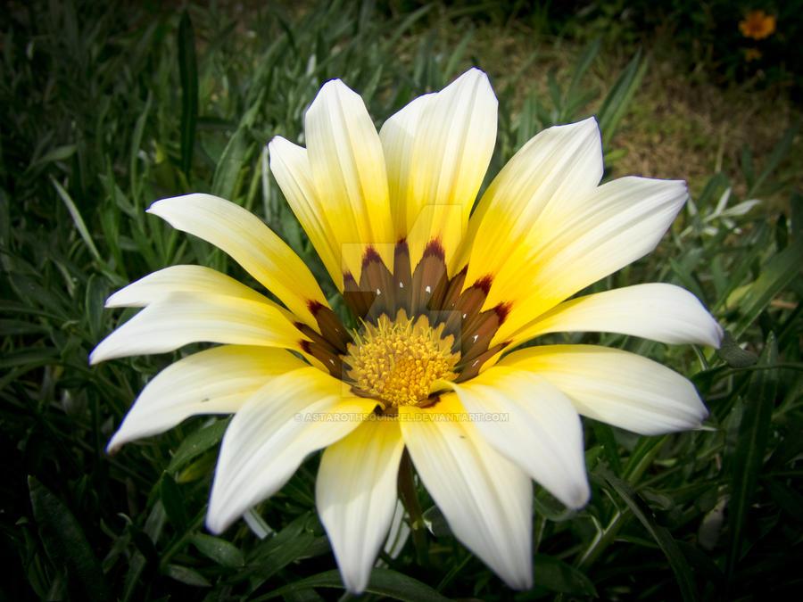 A Turkish Flower by AstarothSquirrel