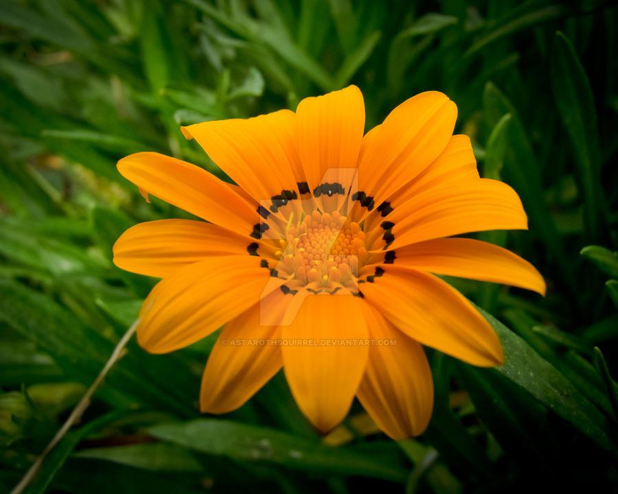 Turkish Flower by AstarothSquirrel