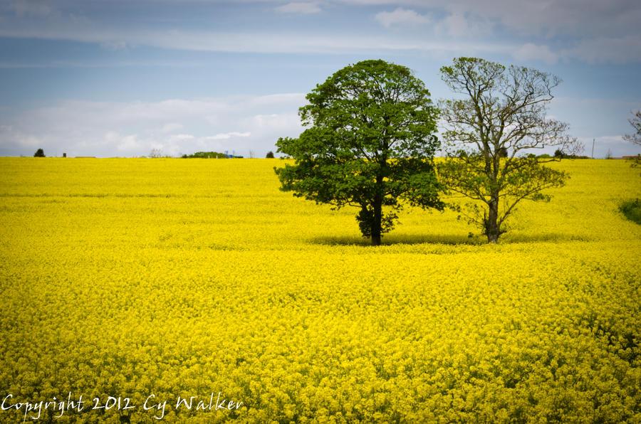 Field of Yellow by AstarothSquirrel