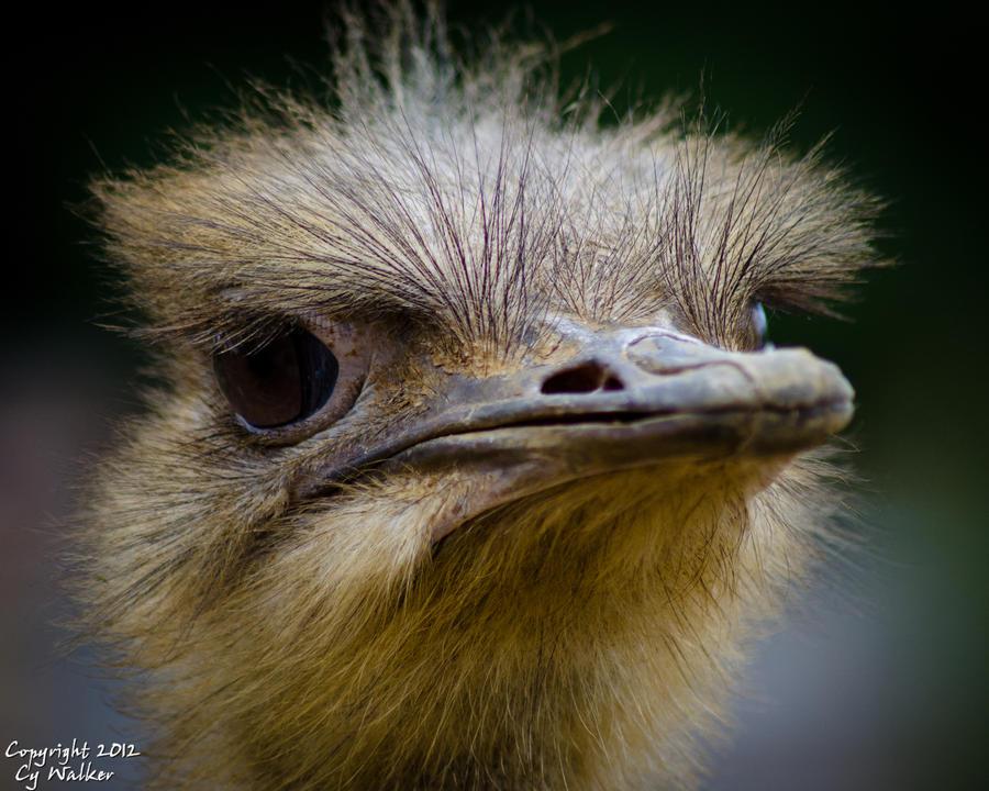 Ostrich I by AstarothSquirrel