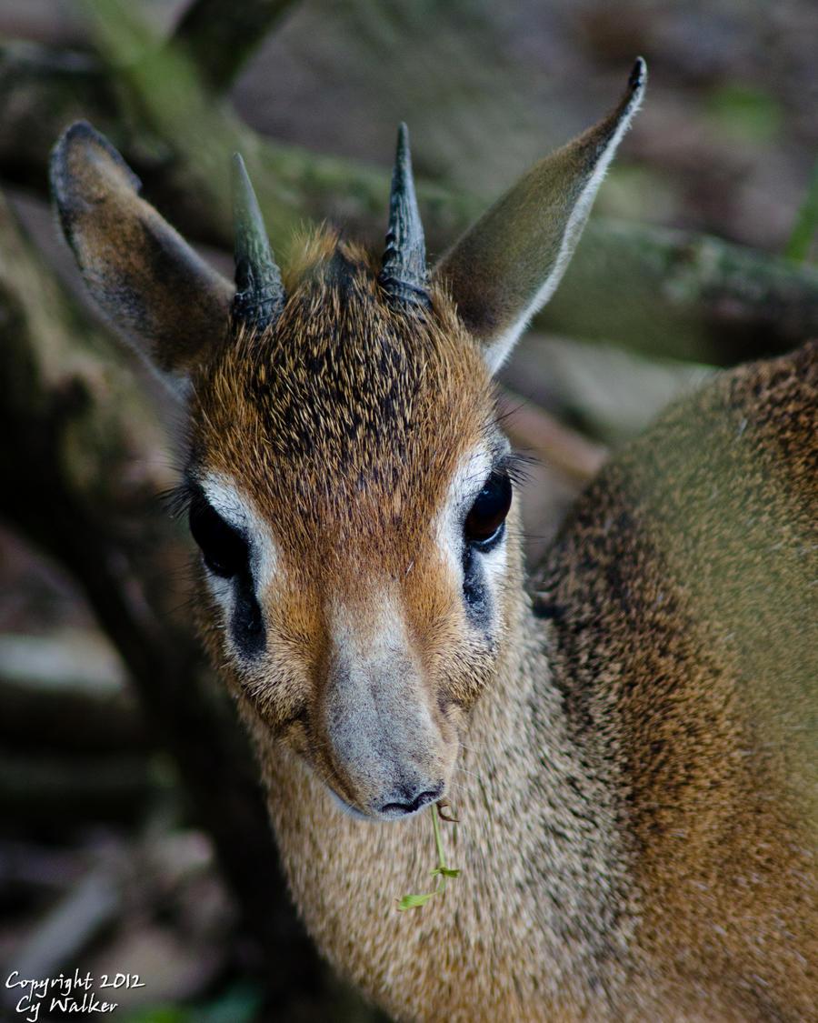 Bambi? by AstarothSquirrel