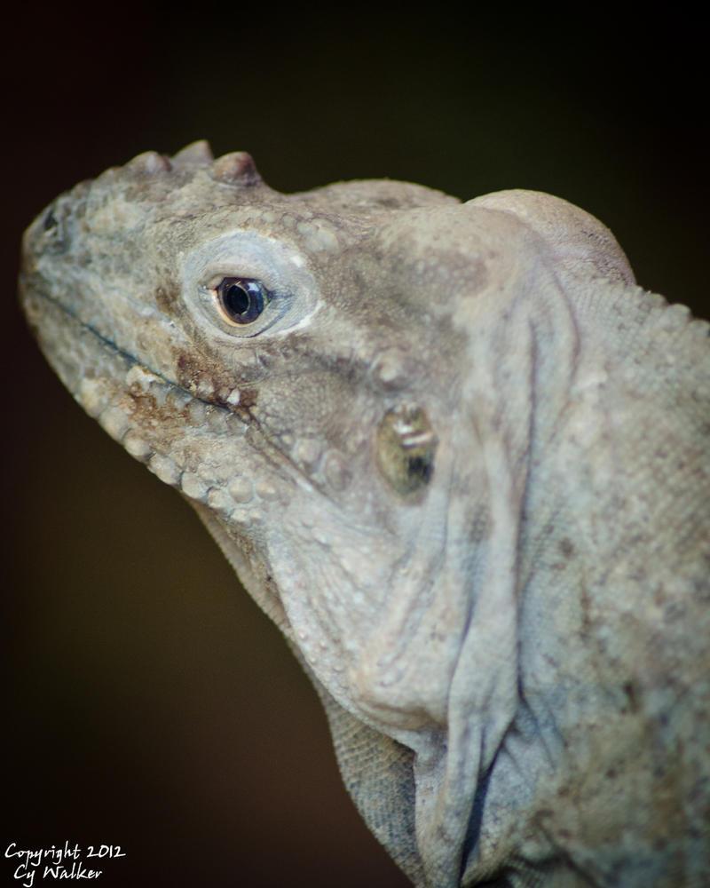 Iguana by AstarothSquirrel