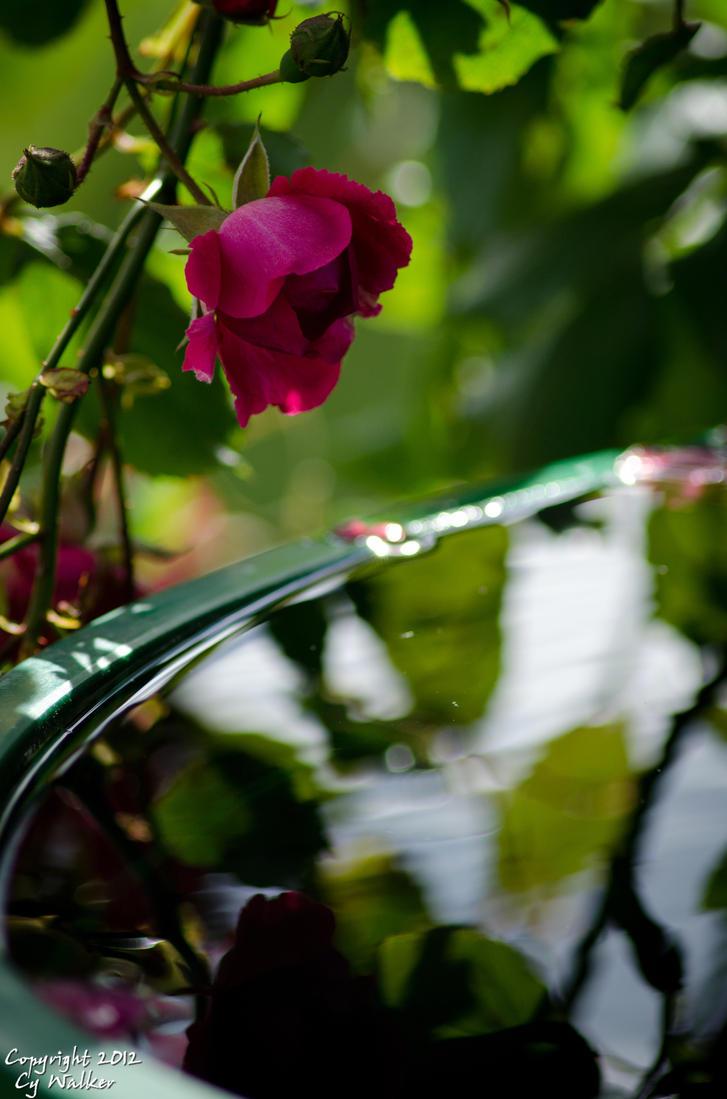 Rose by AstarothSquirrel