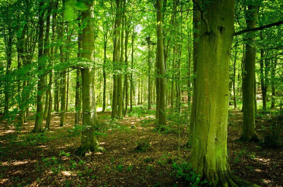 Bacton Woods by AstarothSquirrel