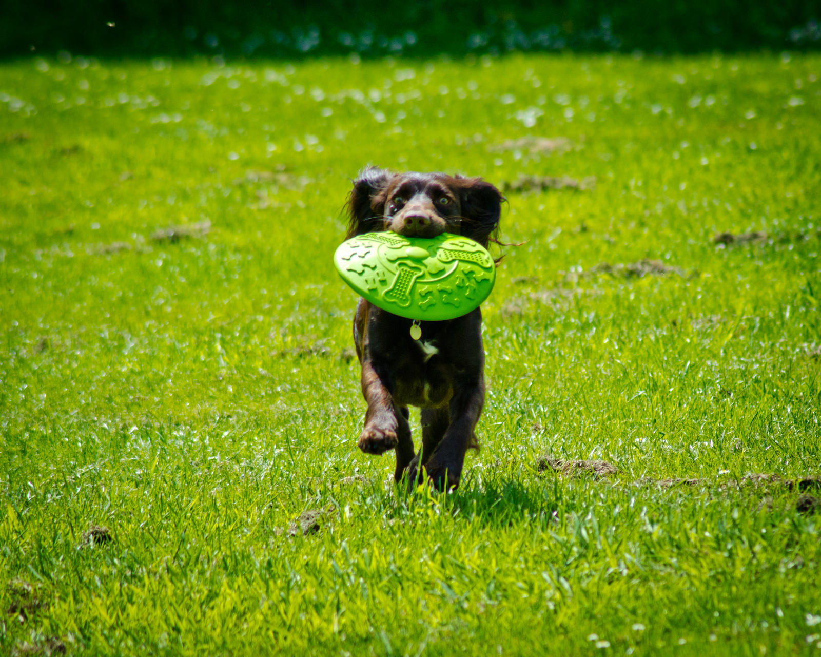 Dora and her Frisby by AstarothSquirrel