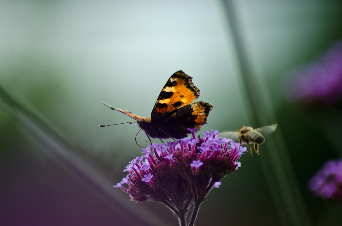 Tortoise Shell Butterfly and Bee by AstarothSquirrel