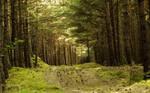 Sunny Forest by ixada