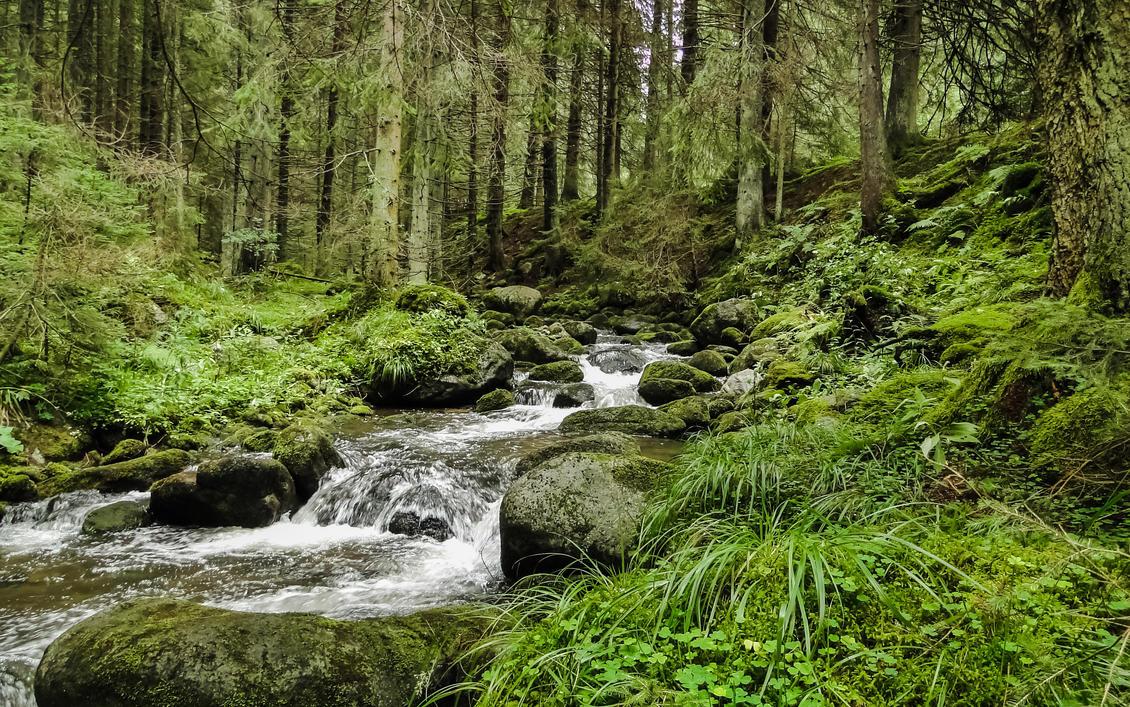 Forest Stream by ixada on DeviantArt
