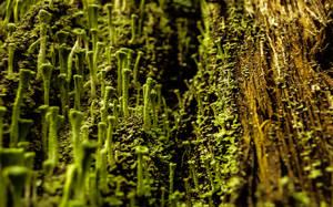 Green Mushrooms by ixada