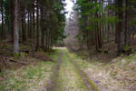 Forest Road II - Stock Photo