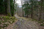 Forest Road III - Stock Photo