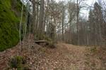 Forest VI - Stock Photo