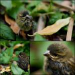Free Little Bird