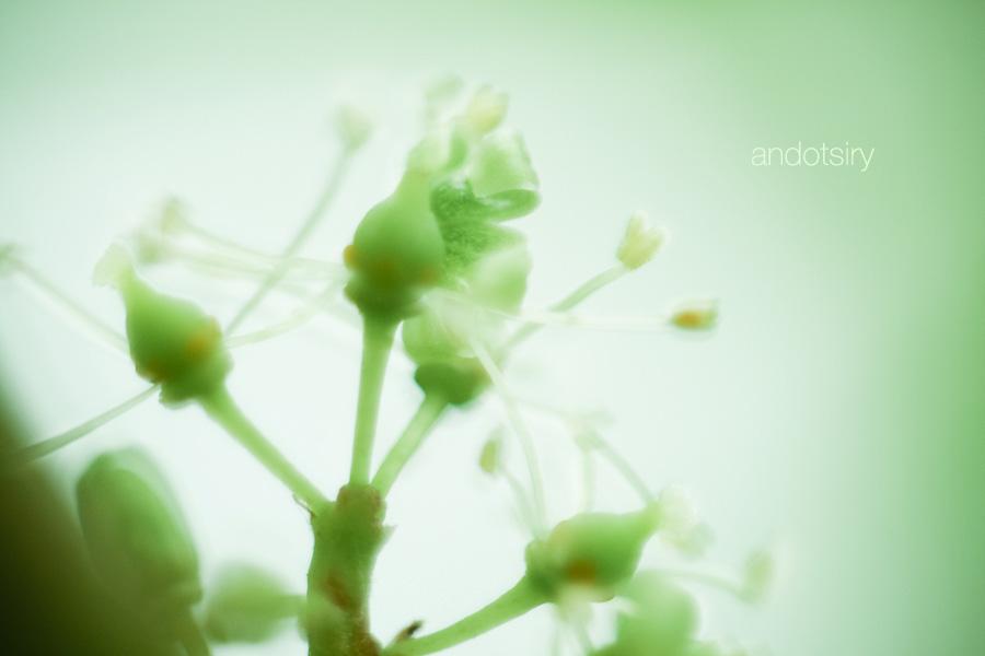 Close Up IV by andotsiry