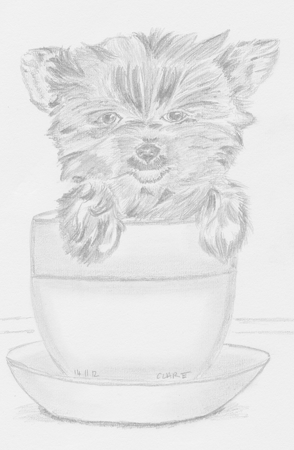 Yorkie Puppy in a Tea Cup by CrystalSabre on DeviantArt