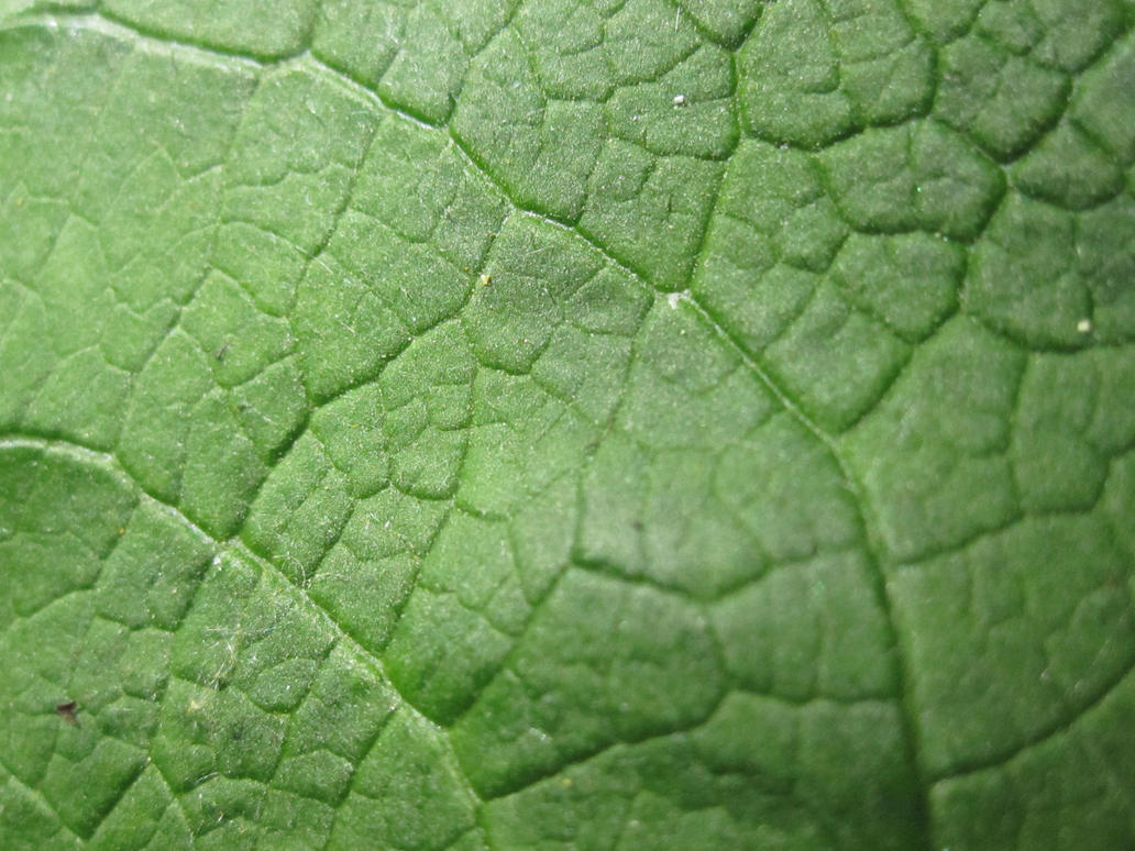 leaf texture green by Anilestock
