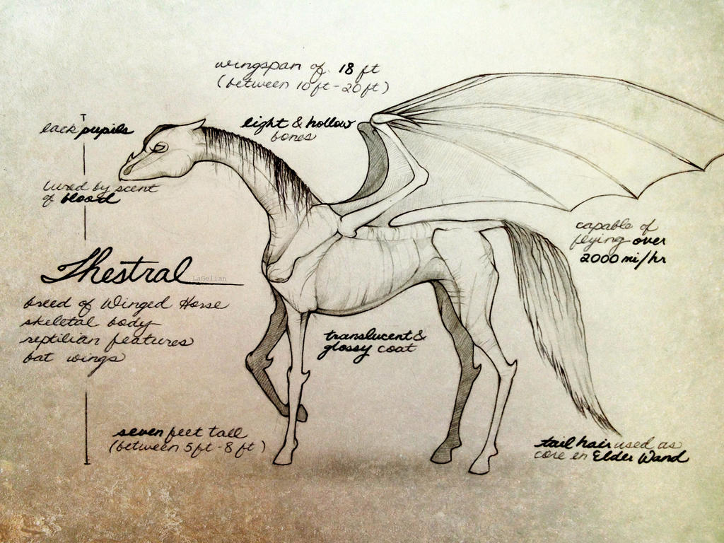 Thestral by LaGelian on DeviantArt