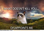 Grumpy cat and disappointment