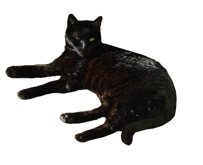 Black Cat - Transparent Background by Blackcatmagick41 on ...